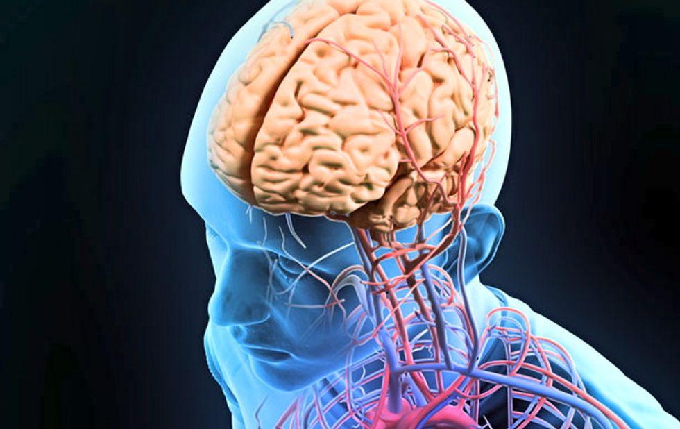 Scientists reprogram brain cells that store memories about places