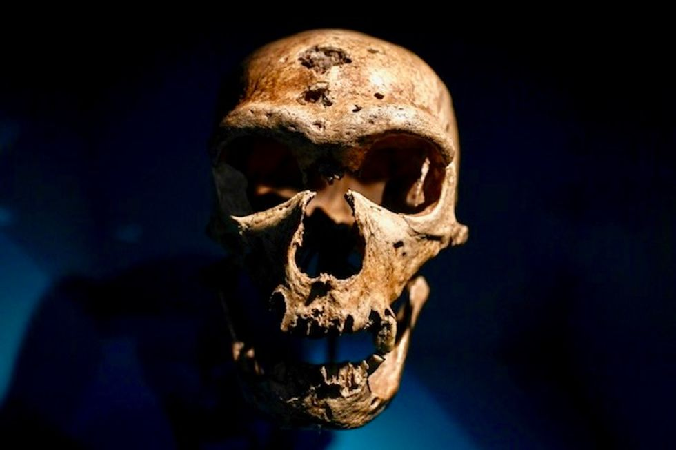 Were other humans the first victims of the sixth mass extinction?