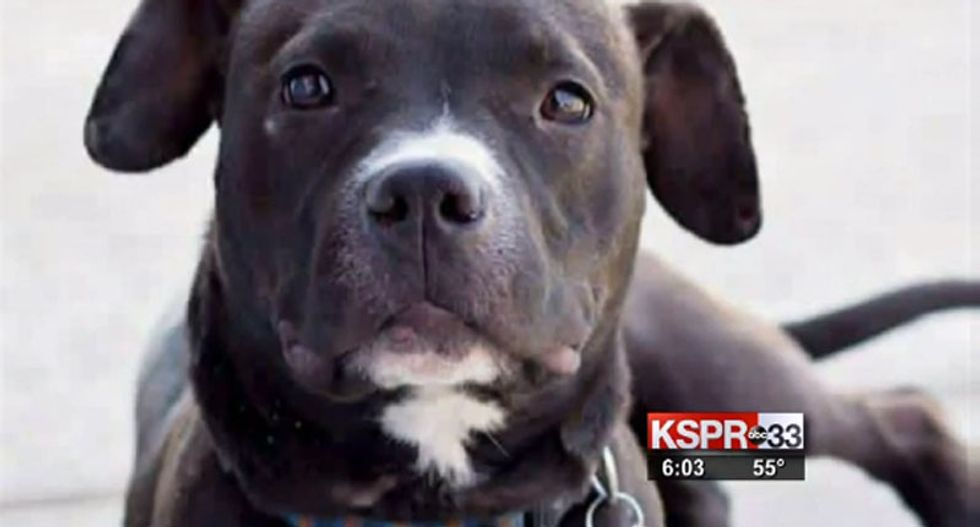 Missouri police chief resigns after caging family's lost puppy at a gun range and shooting it
