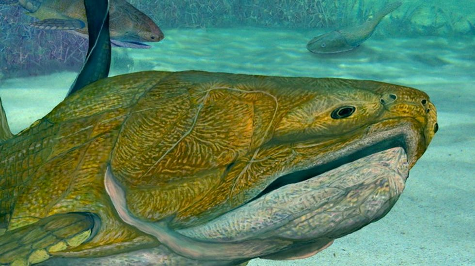 Scientists discover 419-million-year-old fish fossil that shows roots of modern jaw