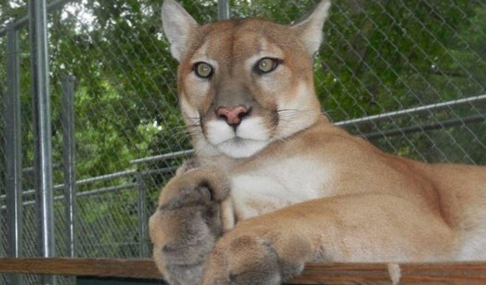Florida wild cat sanctuary caught in hurricane MIchael's path