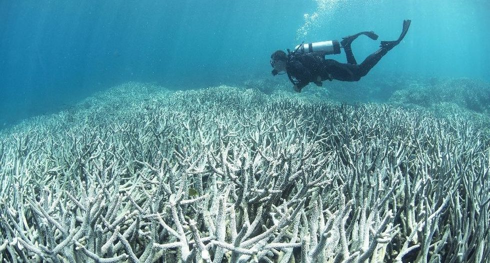 Large parts of Great Barrier Reef 'dead in 20 years'