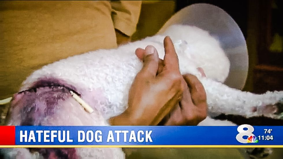 Naked Florida man sends 5 dogs to viciously kill poodle because owner is a Muslim 'terrorist prick'