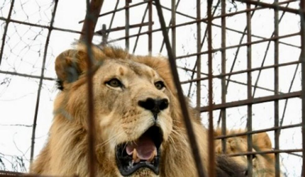Animals rescued from 'hellish' Albanian zoo