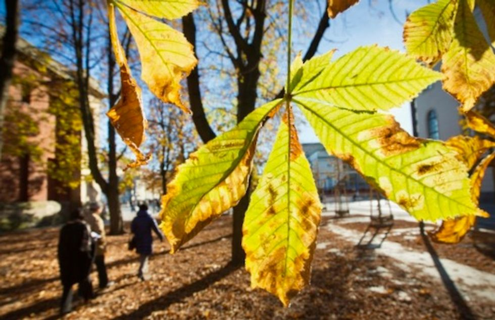 Over half of Europe's endemic trees risk extinction: experts
