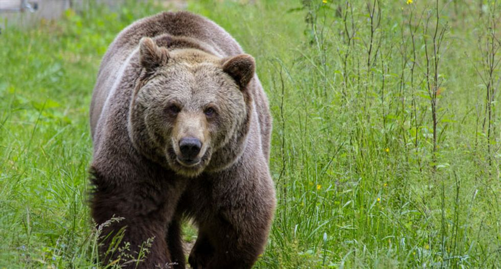 Romanian politician calls on the army to wage war against rampaging brown bears