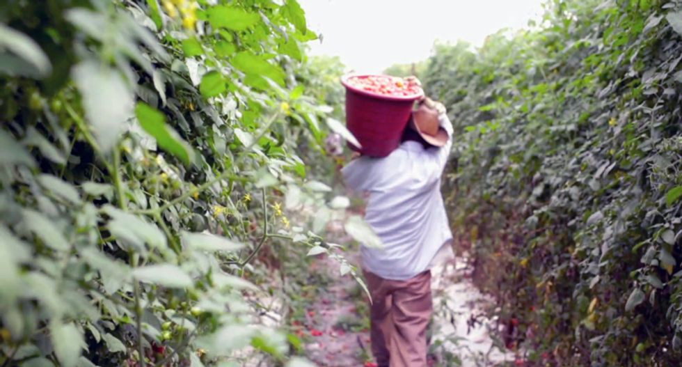 New documentary 'Food Chains' explores plight of farmworkers who make your Thanksgiving possible