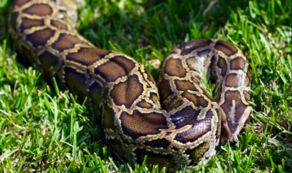 Woman found dead with python around neck in US snake house