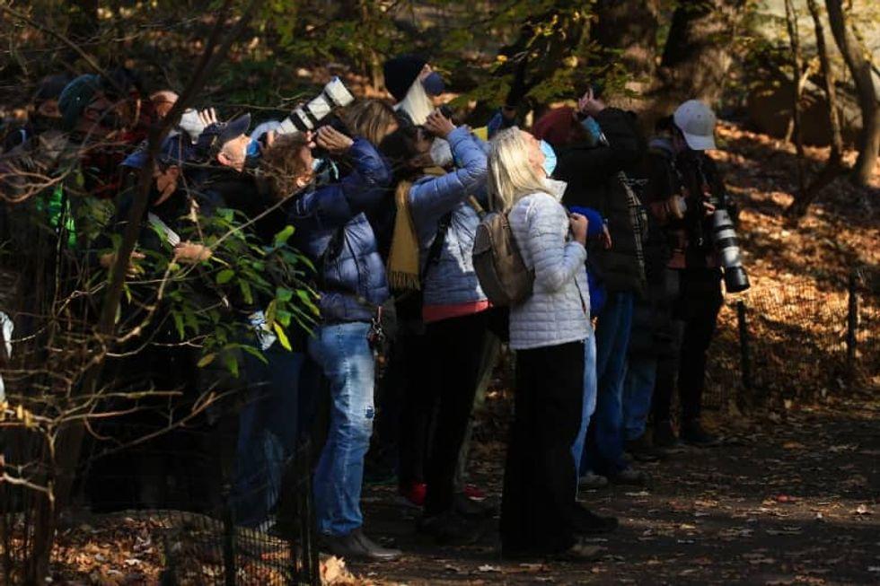 Birding is socially distanced New York's hottest hobby