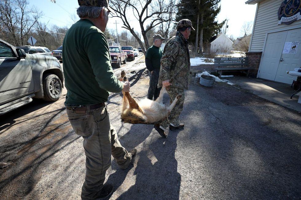 It's coyote-killing season in Pennsylvania. Are the hunts barbaric or necessary population control?