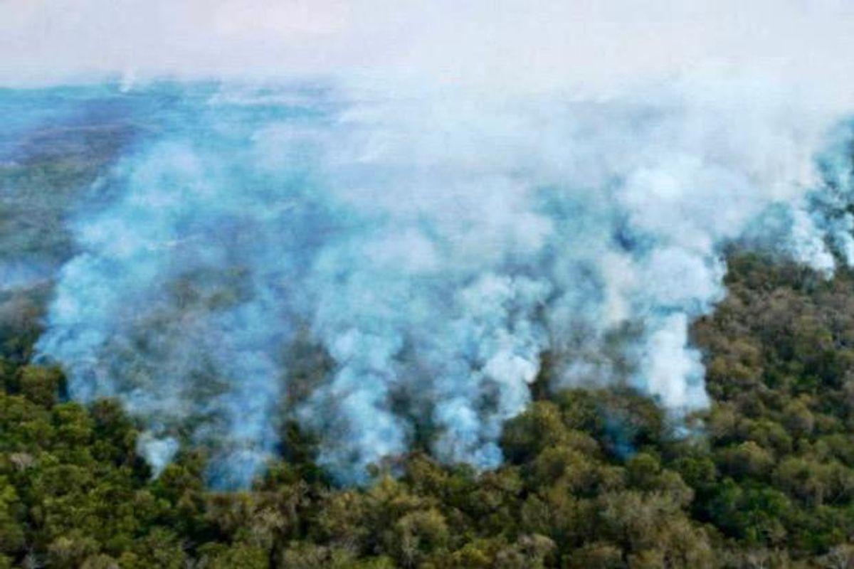 Sharp increase in destruction of virgin forest in 2020