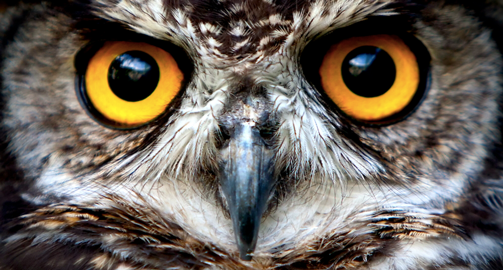 Listen to this pharmacy explain how a homeopathic remedy made from owls will cure your insomnia