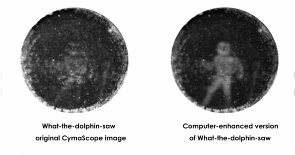 This picture reveals how dolphins communicate — and how we may some day understand their language
