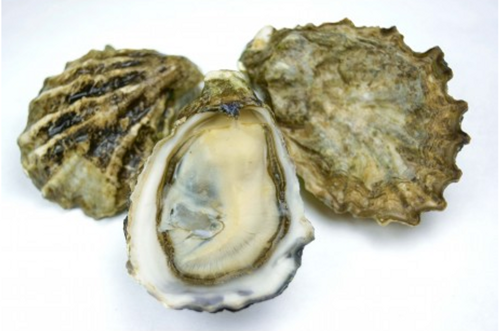 A deadly herpes virus is threatening oysters around the world