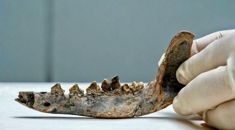 Researchers say fossil shows humans, dogs lived in Central America in 10,000 BC