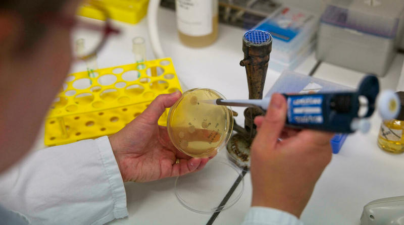 Vaccine nasal sprays aim to 'shut door' on virus